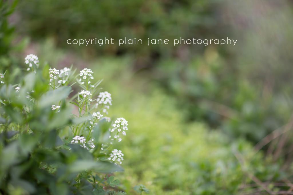 spring (2 of 8) copy